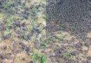 Aneh, Ribuan Burung Pipit Mendadak Mati Berjatuhan di Kuburan Adat