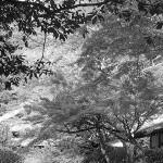 El momiji o koyo: la celebración japonesa del otoño