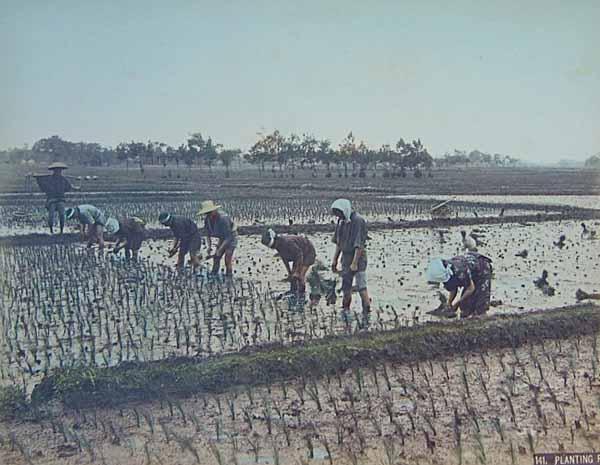 Kusakabe Kimbei-Plantando arroz