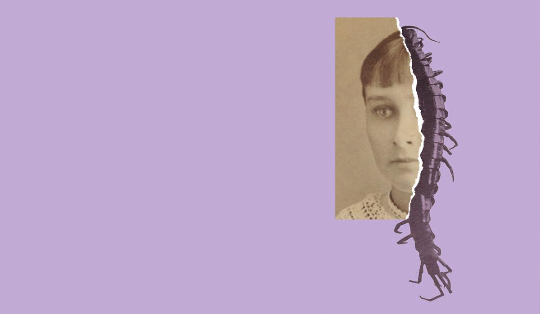 'El nenúfar y la araña', de Claire Legendre - Tránsito editorial