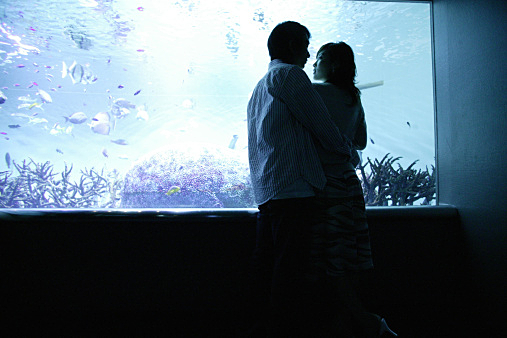 Silhouette of a young couple standing by an aquarium