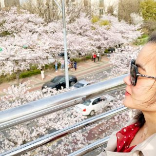 Yeouido park, Cherry blossoms
