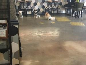 DA DOG in the city店内