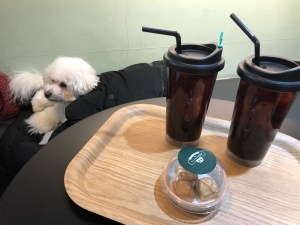 Dogentle Cafe