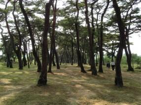 Riverside forest.