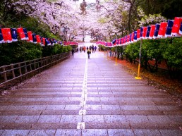 Cherry Blossom Festival - Jinhae, South Korea