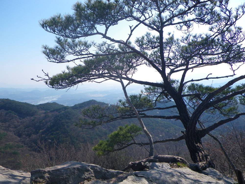 Mt.Gangcheon Hiking and the Hampyeong Butterfly Festival (1/6)