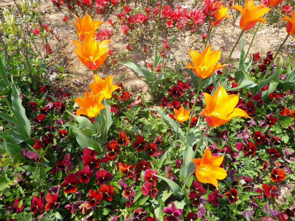 Mt.Gangcheon Hiking and the Hampyeong Butterfly Festival (5/6)