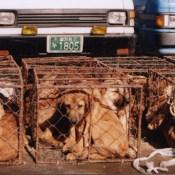 Dog Abuse Photos
