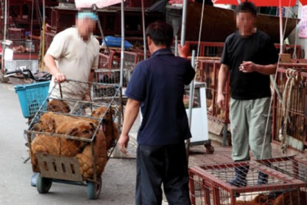 Dog Meat Market