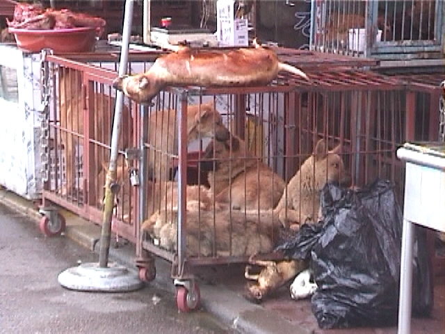browned dog -on cage with dogs Sungnam 2000