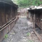 Dog Farm 2