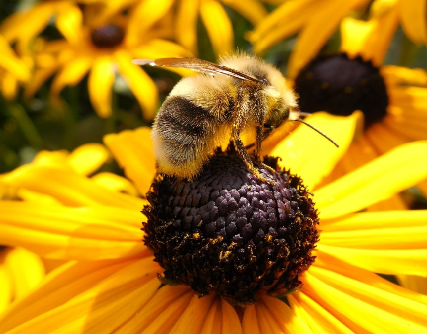 propolis benefits for skin korean skincare products with propolis