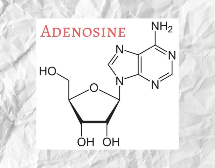 adenosine anti wrinkle skincare benefits korean skincare ingredients