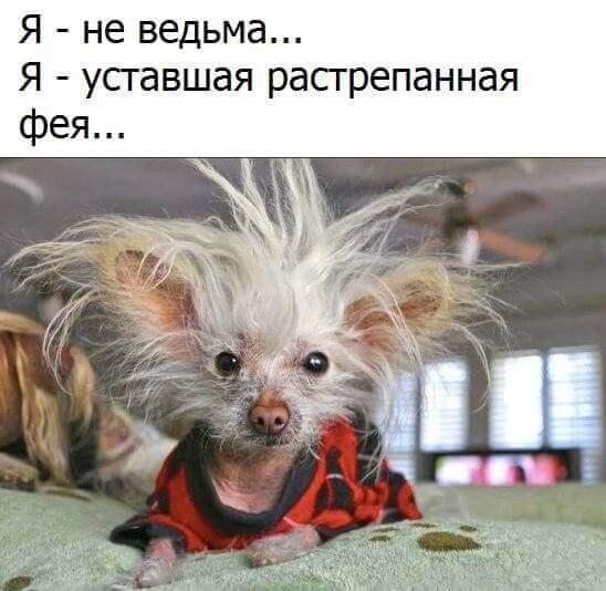 Смешные картинки животных с надписями   Корки.lol