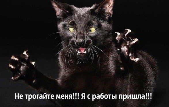 Смешные картинки животных с надписями | Корки.lol