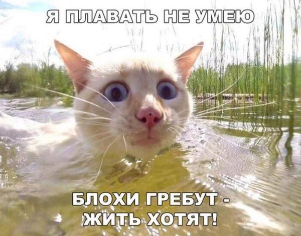 Прикольные и ржачные картинки | Корки.lol