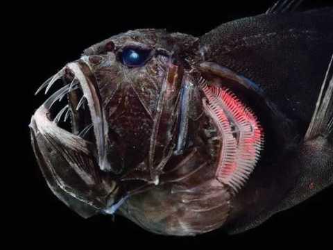 Страшные новые рыбы стали сюрпризом.