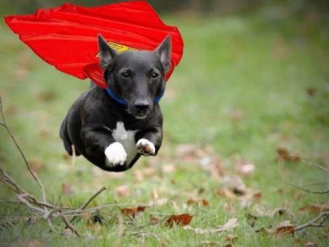 Супер-способности животных.