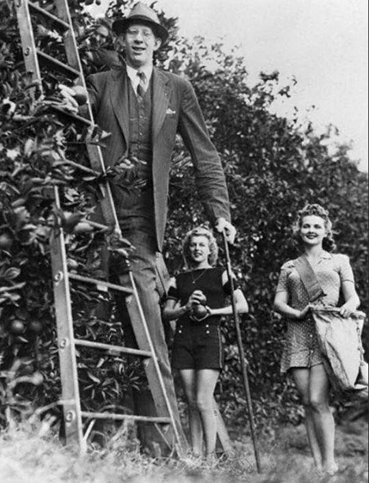 Вряд ли Роберт когда-нибудь задумывался об использовании стремянки.