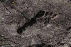 Окаменелые следы гигантов обнаружены в Китае