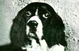 Чудо-пёс Джим: оккультный пёс — экстрасенс