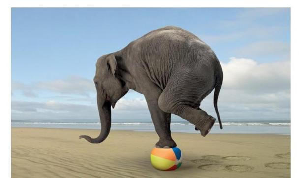 elephant-balance