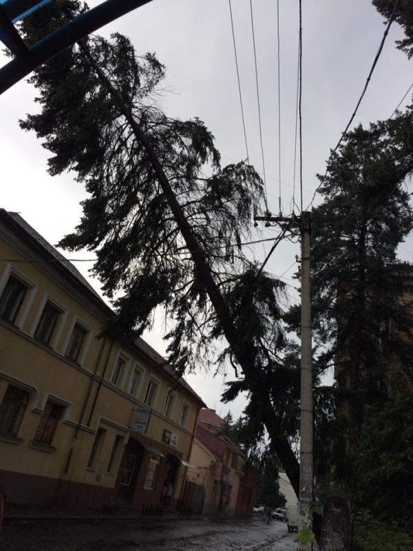 В Ужгороді буревій валив дерева на машини та дороги (ФОТО)