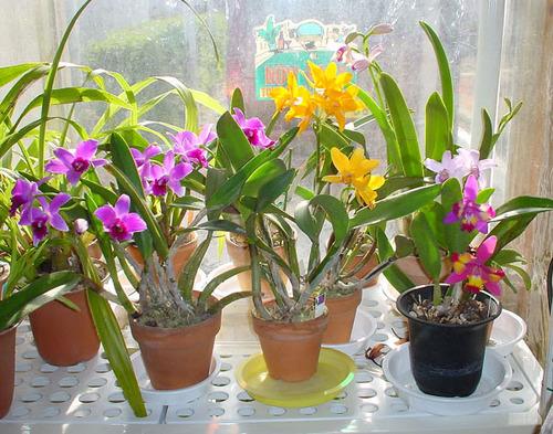 洋蘭の栽培(2): たかchanのブログ