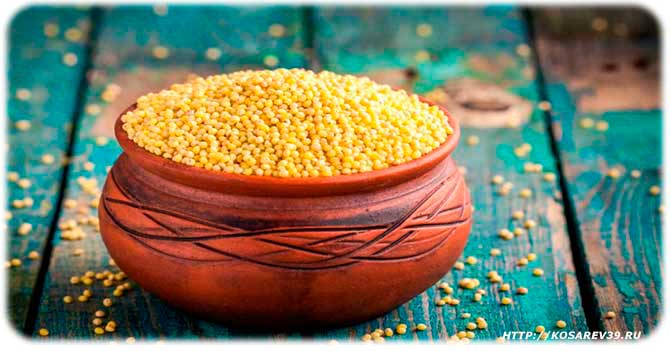Millet from cystitis