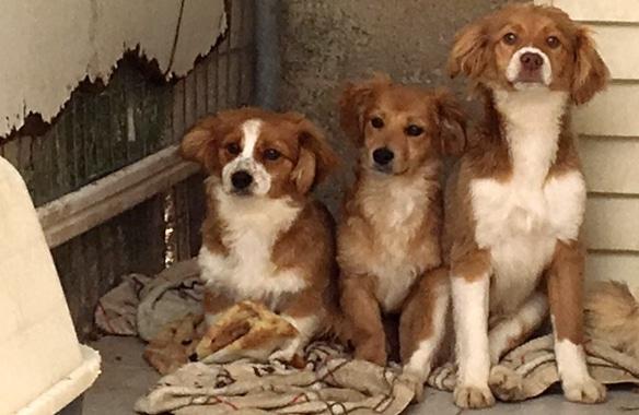 Nachhaltigkeit Tierschutzverein auf Kos, Welpen