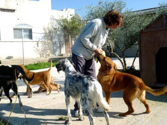 Rita mit Hunden