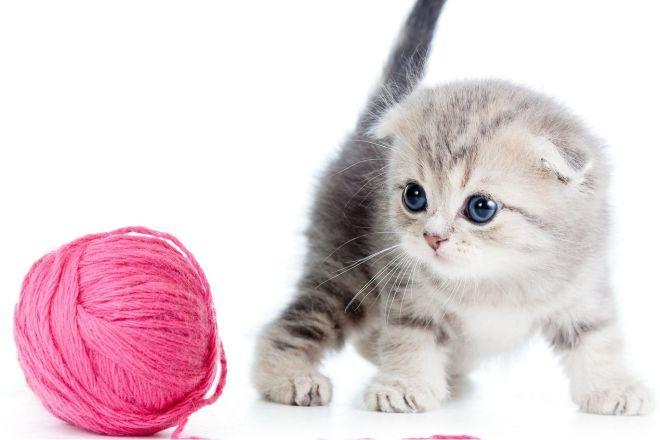 Котенка және жанған жіп