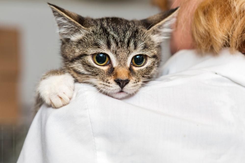 Как прощупать мочевой пузырь у кота