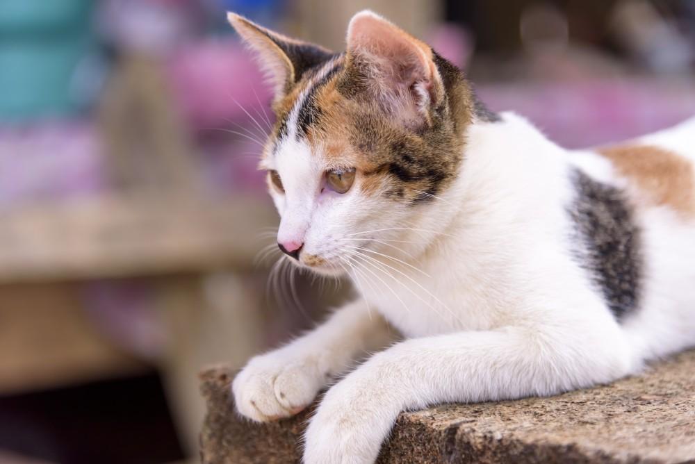 Анализ мочи у кошек что может показать. Белок в моче у кошек: причины и лечение
