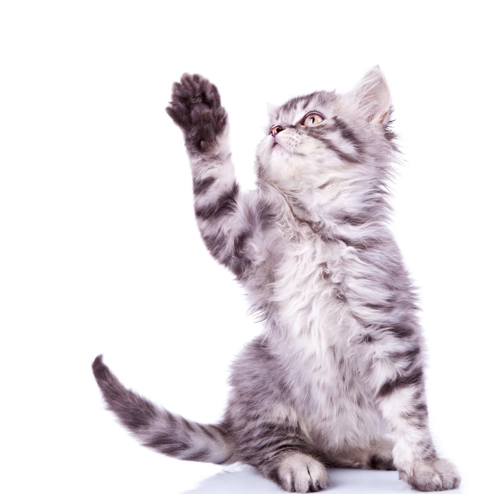 Кровавые выделения у кошки