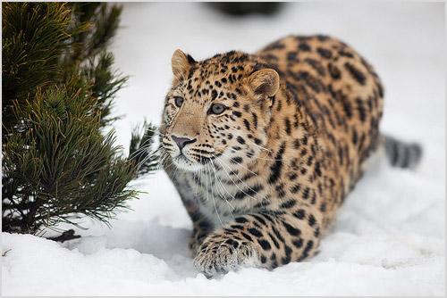 leopard și viziunea sa