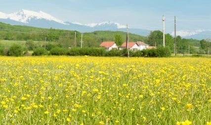 Nature landschape Kosovo with flowers