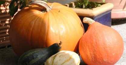 PumpkinBhdlg