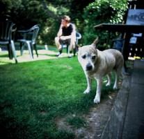 pensive_hound_web