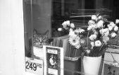 Photo5_cat
