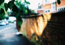 leaves_web