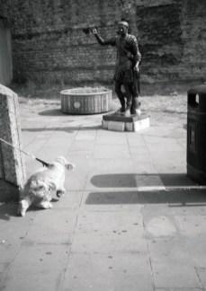 dog_web