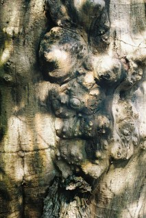 8. tree trunk