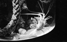crayfish_web
