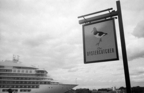oystercatcher_web