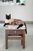Hocker mit Katze