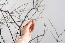 Bällchen kurz an die Zweige drücken.