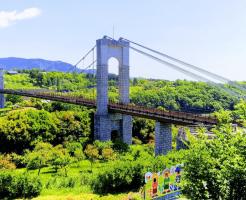 秦野戸川公園吊り橋