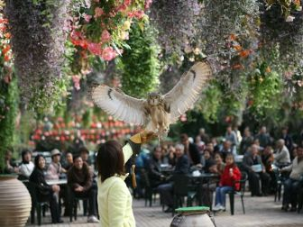 富士花鳥園のフクロウ